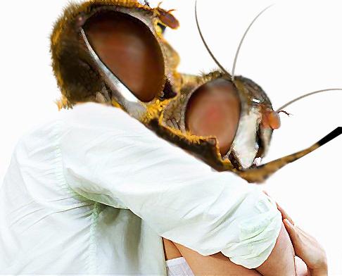 couple bee #